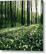 Spring Forest View With Anemones, Rugen Metal Print by Sisse Brimberg
