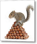 Squirrel And Nut Pyramid Metal Print by Mark Taylor