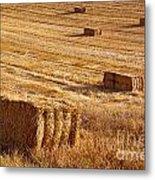 Straw Field Metal Print