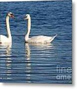 Swan Mates Metal Print by Sabrina L Ryan