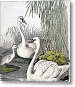 Swans, C1850 Metal Print by Granger