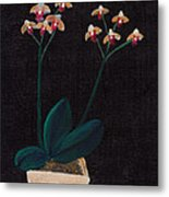 Table Orchid Metal Print