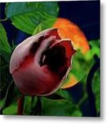 The Moon And The Rose Metal Print