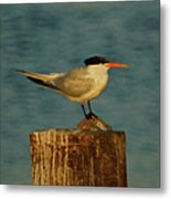The Tern Metal Print by Ernie Echols