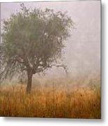 Tree In Fog Metal Print