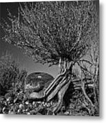 Twisted Beauty - Bw Metal Print by Christopher Holmes