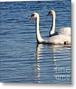 Two Beautiful Swans Metal Print by Sabrina L Ryan