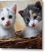 Two Kittens In Basket Metal Print by Garry Gay