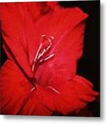 Vision Of Red Metal Print by Cathie Tyler