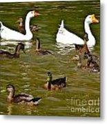 White Geese And Ducks Metal Print