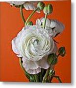 White Ranunculus Close Up In Red Vase Metal Print by Garry Gay