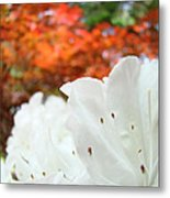 White Rhododendron Flowers Autumn Floral Prints Metal Print by Baslee Troutman
