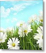 White Summer Daisies In Tall Grass Metal Print