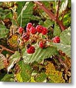 Wild Berries Metal Print by Liz Vernand