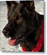 Winter Dog Metal Print by Karol Livote