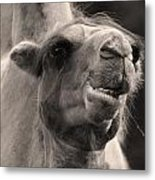 You're Ugly But You Intrigue Me Metal Print by Barbara  White