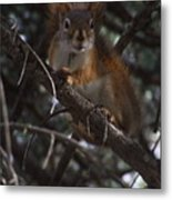 Nuts    Is My Name Metal Print