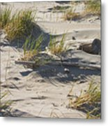 Sand And Driftwood Popham Beach Maine Metal Print