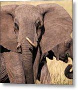 1-elephant Metal Print