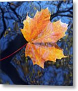 All About Autumn Metal Print
