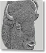 American Bison Metal Print by Larry Linton
