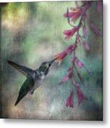 Anna's Hummingbird Metal Print