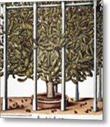 Cactus: Opuntia, 1613 Metal Print