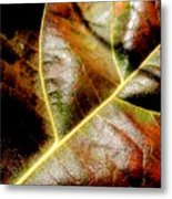 Closeup Metal Print