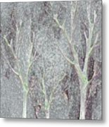 Cold Day In The Park Metal Print