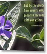 1 Corinthians 15 Vs 10 Lavender Blossom Metal Print