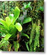 El Yunque National Forest Metal Print