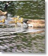 Family Of Geese Metal Print