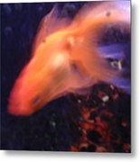 Fire Comet In Aquarium Metal Print