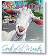 Goats Of St. Maarten- Sofie Metal Print