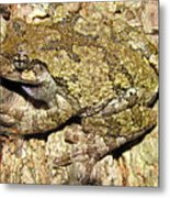 Gray Tree Frog Metal Print