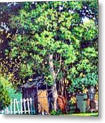 Hackberry Tree Metal Print
