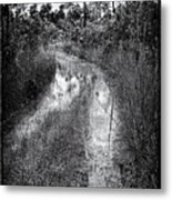 Hiking Trail  Metal Print