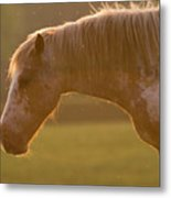 Horses In The Evening Light Metal Print