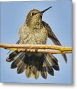 Hummingbird On A Branch Metal Print