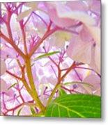 Hydrangeas Flowers Art Prints Hydrangea Art Giclee Baslee Troutman Metal Print