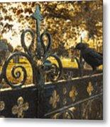 Jackdaw On Church Gates Metal Print by Amanda Elwell