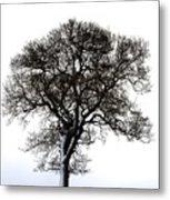 Lone Tree In Field Metal Print by John Short