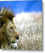 Looking On Metal Print