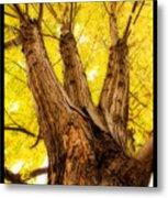 Maple Tree Portrait 2 Metal Print