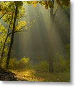 Mystic Morning Metal Print