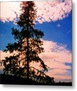 Pine Tree By Peck Lake 4 Metal Print