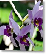 Purple Orchids Metal Print