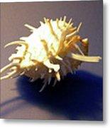 Seashell Spondylus Americanus Metal Print