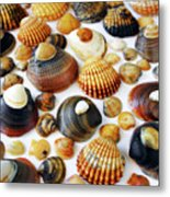 Shell Background Metal Print