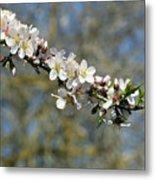 Spring Blooming. Metal Print